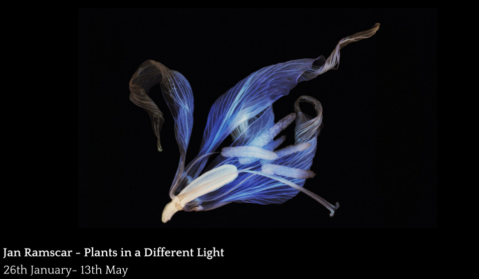 Jan Ramscar: Plants In A Different Light